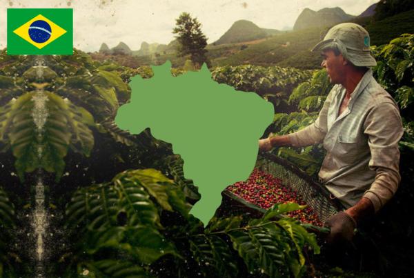 Importazione caffe dal Brasile